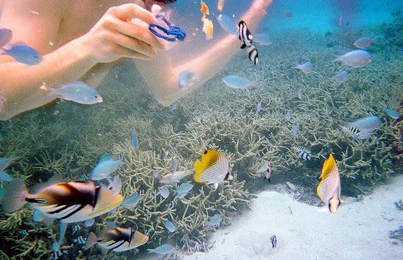 Featured Locale: Moorea, French Polynesia