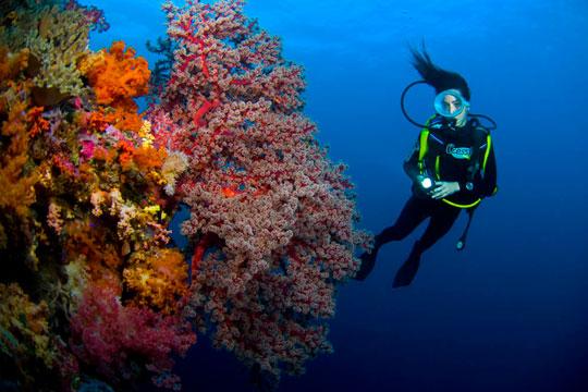 Featured Locale: Fiji Islands